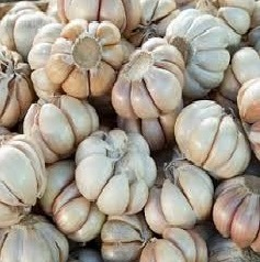 Agricultural Seeds and Bulbs
