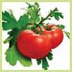 Fruit powder & vegetable powder